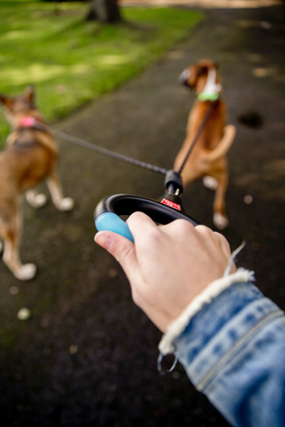 2 Dog Rope Leash With Lights (Rechargeable)